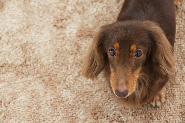 犬に薬やサプリメントを簡単に飲ませる方法!失敗例と成功例