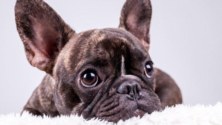 ヨーロッパ原産の犬種3選