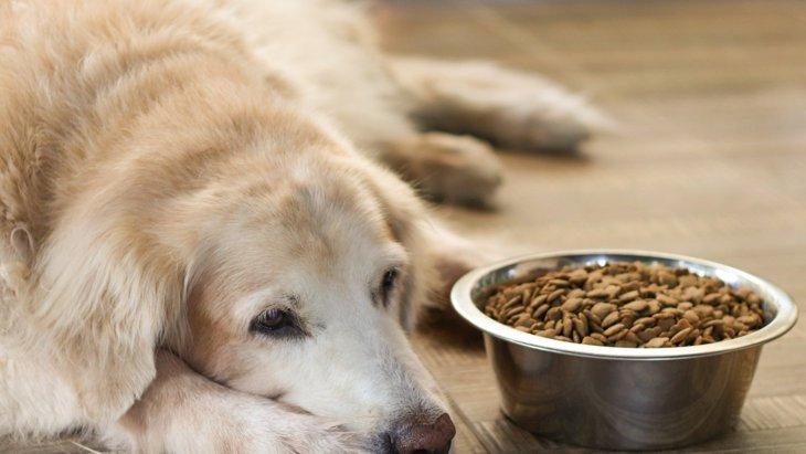 犬の健康と食事の関係を考える3つの観点