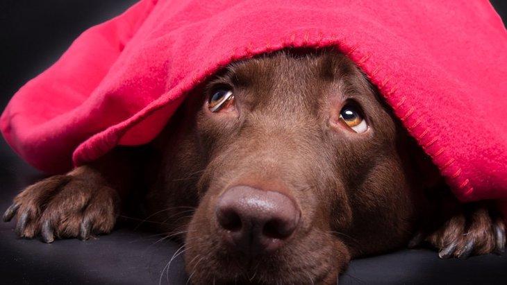 『触ってはいけない犬』の特徴5選!あなたの行動が思わぬ迷惑に繋がる可能性も