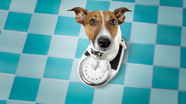 犬が急に痩せる原因と考えられる病気、対策について