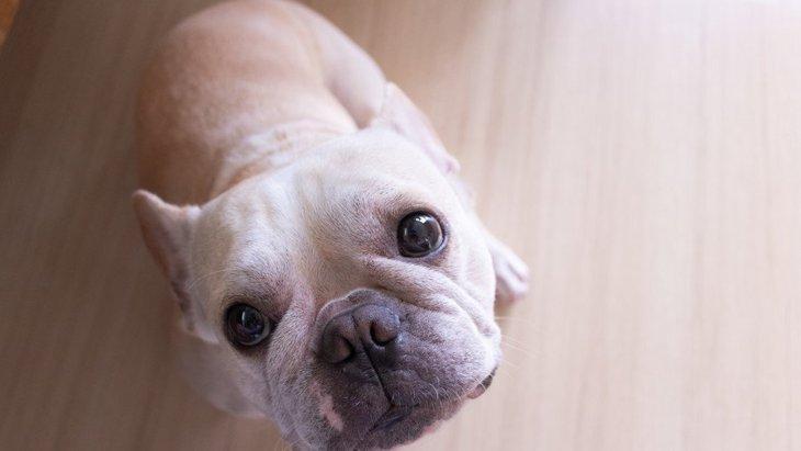 犬が飼い主の前でかわいい仕草をする本当の理由4選