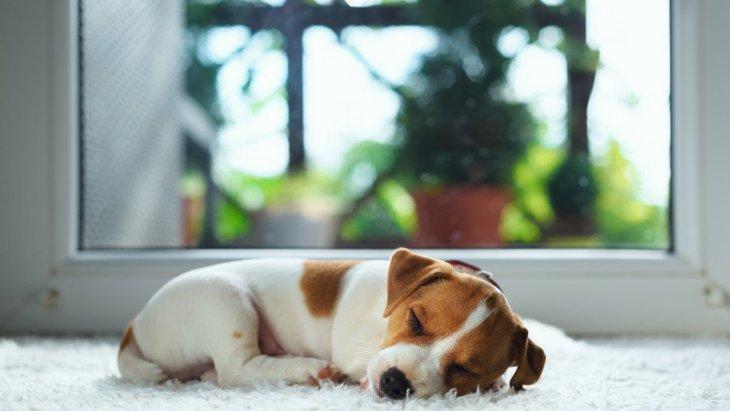 犬が『体を丸めて眠る』心理4つ
