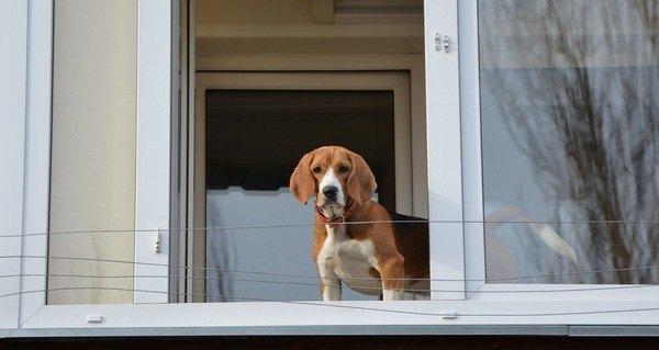 犬を賃貸で飼えない3つの理由