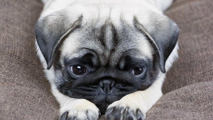 犬が『辛い』と感じてしまう飼い主の行動3選