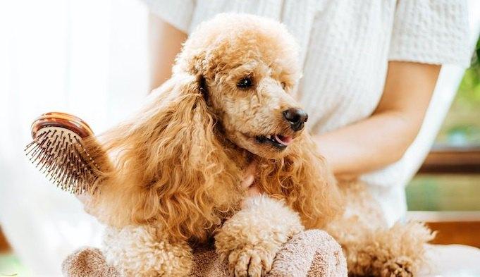 犬にとってNGな『アロマ』3選!危険なアロマ使っていませんか?