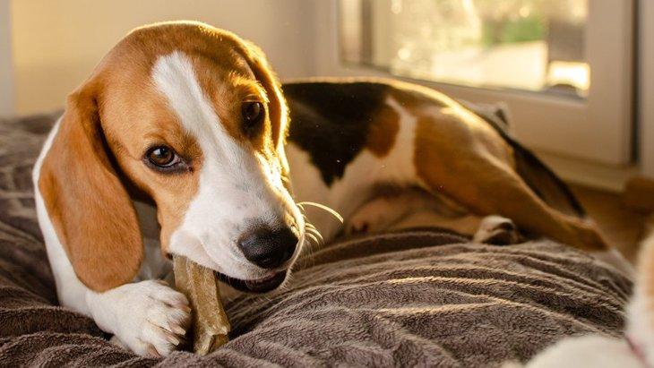 犬が隠れてご飯をたべようとする心理4つ