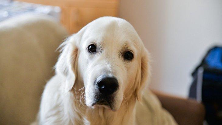 愛犬を褒めても喜んでくれない…考えられる理由と対処法