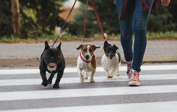 犬がしている『賢い行動』5選