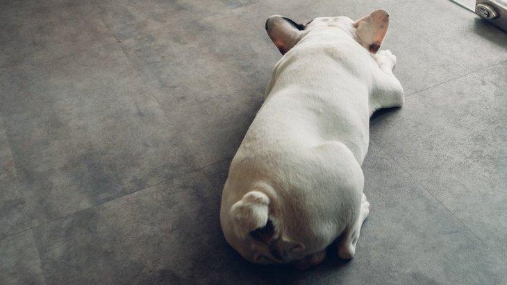 犬のテンションを下げてしまう飼い主の行動5つ!愛犬の元気がないのはこのせいかも?
