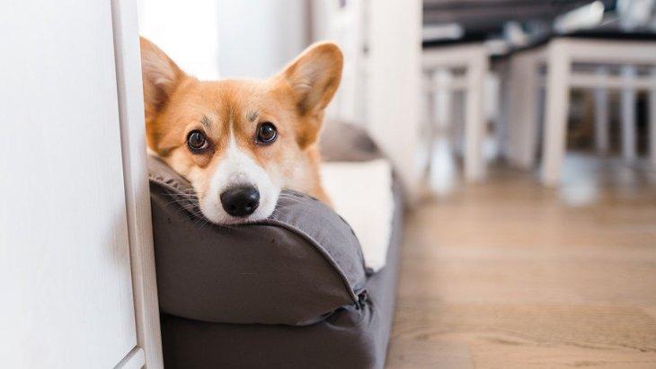 犬があごを乗せがちなもの4選!顎を乗せる時ってどんな心理なの?