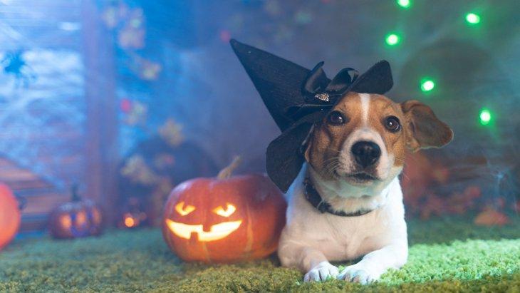秋こそ気をつけるべき『犬の健康管理』5つのポイント