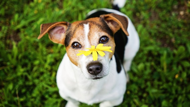 犬の花粉症を疑うべきサイン6つ
