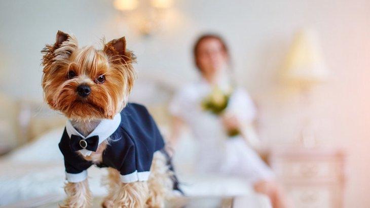 犬が仮装するコスプレが可愛い!ハロウィンコスチュームからかぶりものまで、おすすめ商品15選