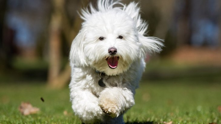 抜けてるところが可愛い♪天然な犬の特徴4選