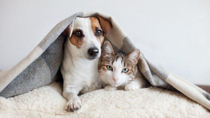 犬が猫の糞を食べる?!理由と対策
