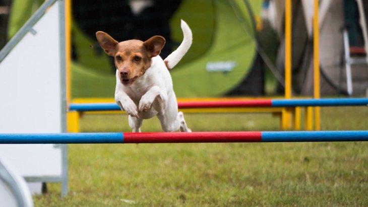 犬と公園での遊び方5つ