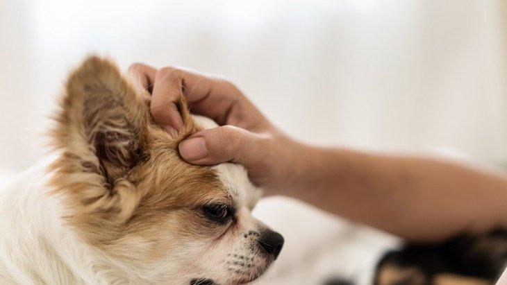 犬にNGな『撫で方』4選 つい飼い主もやっているダメ行動とは