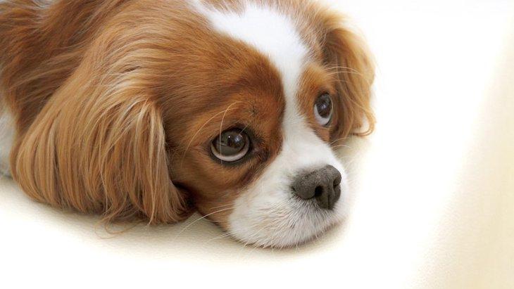犬のワクチン接種後に注意したい2つのこと