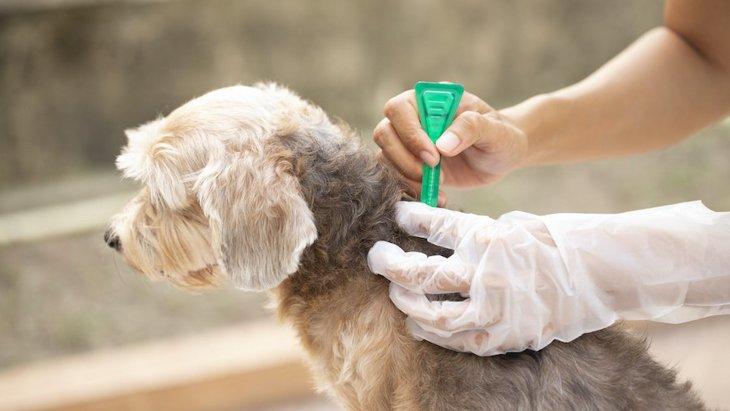犬のノミ駆除薬が環境破壊を引き起こすというイギリスの研究結果と対策