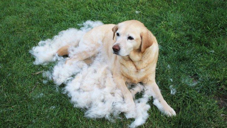 犬用ファーミネーターとは?人気の理由や使い方の注意点について