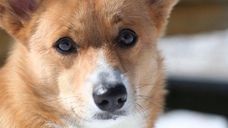 犬が人から敵意を感じたときの行動5つ