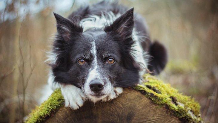 大型犬を飼う前に、必ず知っておくべき5つのこと