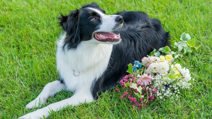 毛並みがキレイで美しい犬種6選
