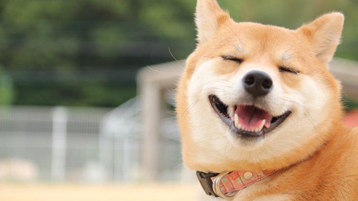 犬が『目を細めている時』に考えていること3選