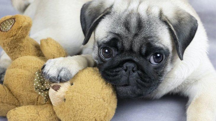 犬の『甘噛み』はやめさせるべき?そのまま放置するとどうなるの?