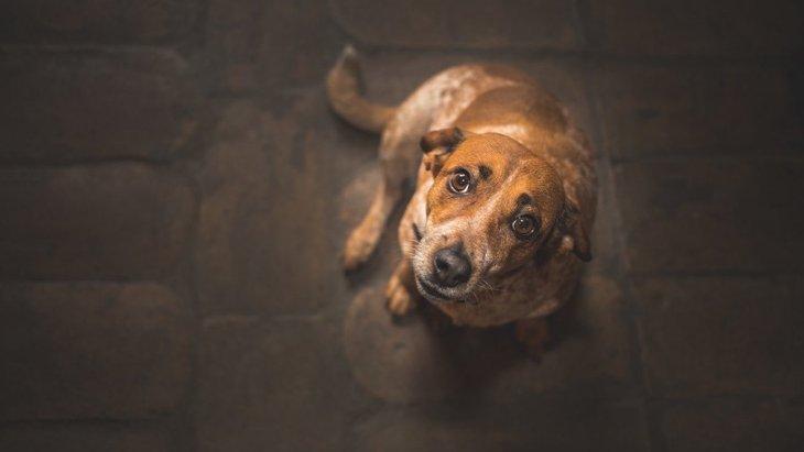 何かを探してるの?犬が部屋の中をウロウロする心理