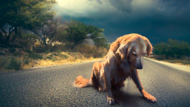犬が悲しい気持ちになる4つのこと