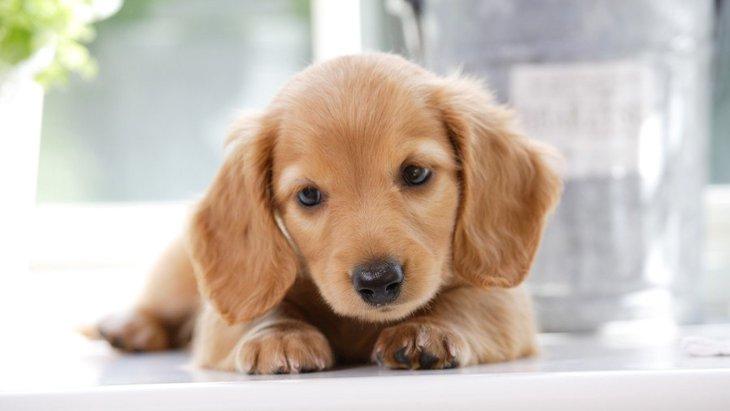 策略かも?犬が飼い主にわざとしている『賢い行動』6選
