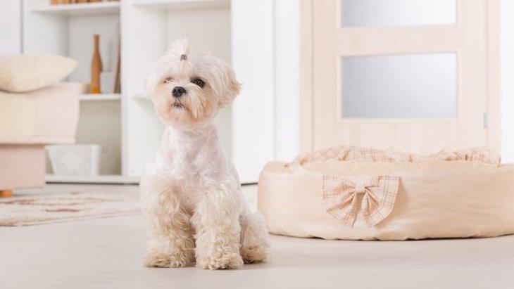 犬を室内で飼育したい!気を付けるべきことと快適に過ごしてもらう工夫