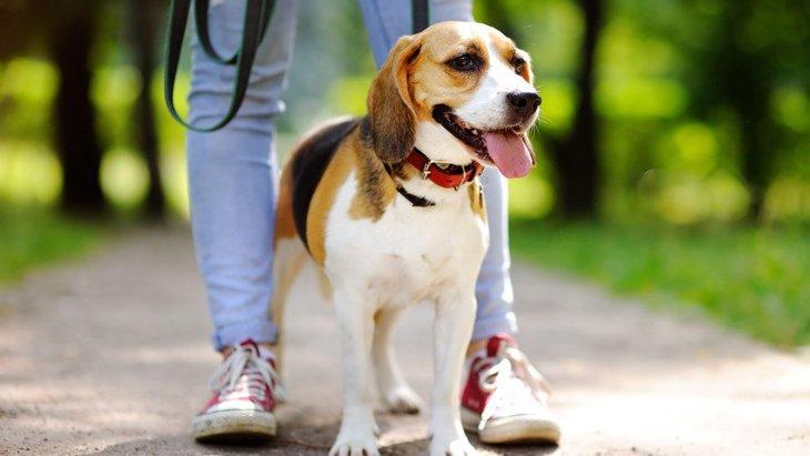 散歩のたびに犬の足を洗うのは間違い?どうするのが一番いいの?