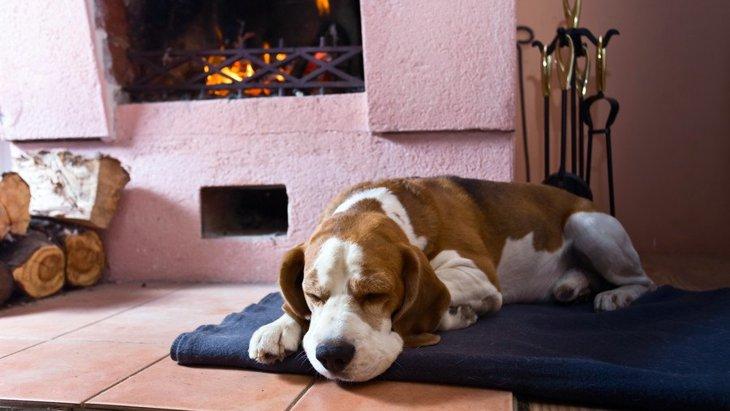 ペットヒーター人気ランキング!犬におすすめの商品の選び方、使い方から注意点まで