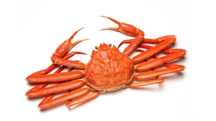 犬はカニ(蟹)を食べても大丈夫?殻や生のまま与えないようにしよう