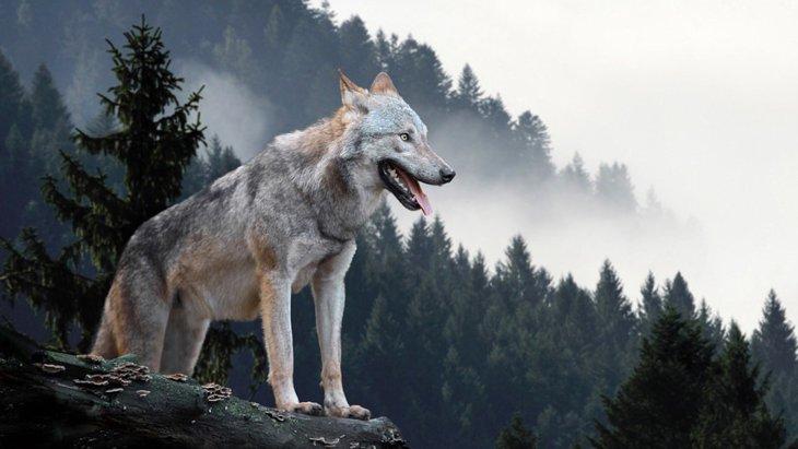 犬の学名とは?正しい読み方や意味について