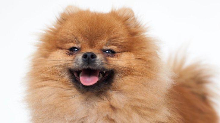 小型犬と大型犬で異なる支出の差!年間費用や保険料を比較