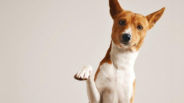 犬が足で飼い主を触ってくる時の心理5つ
