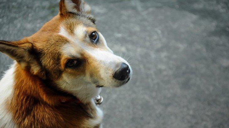 犬が飼い主に冷たい態度をとる時の心理5選