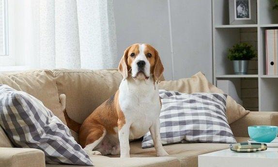 ペット不可のマンションで、犬をこっそり飼ったらどうなる?