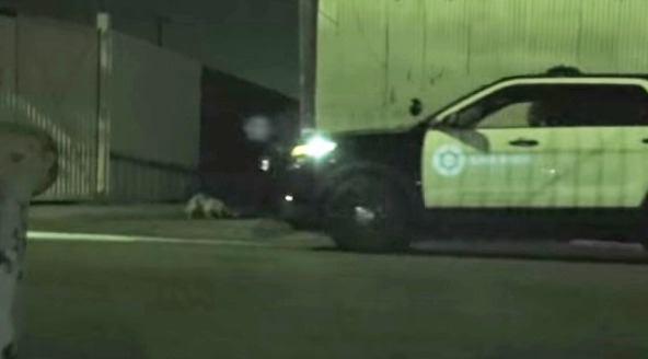 夜間の犬の保護活動は怪しさ満点?あぁ、パトカー邪魔しないで~!