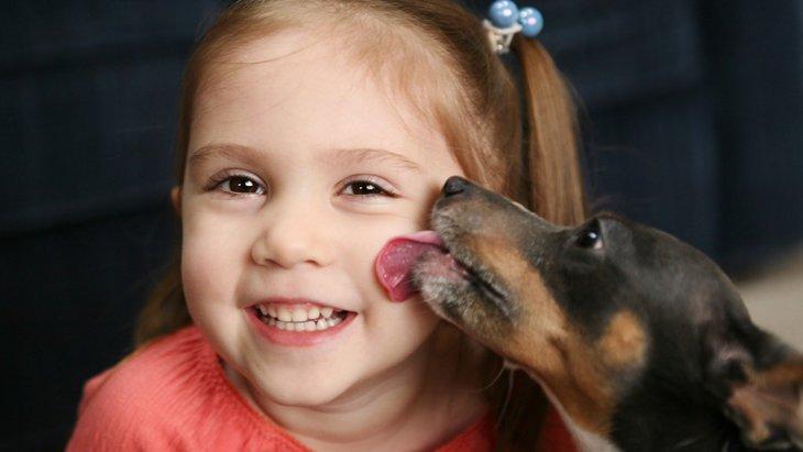 犬に人の顔を舐めさせても平気?