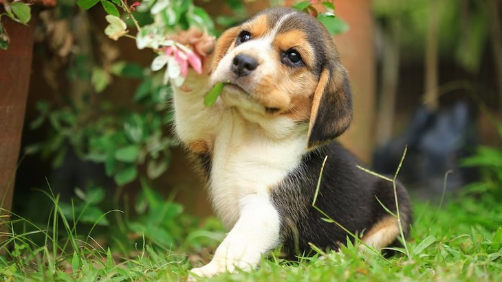 いつ見ても癒される♡子犬がする可愛い仕草5選