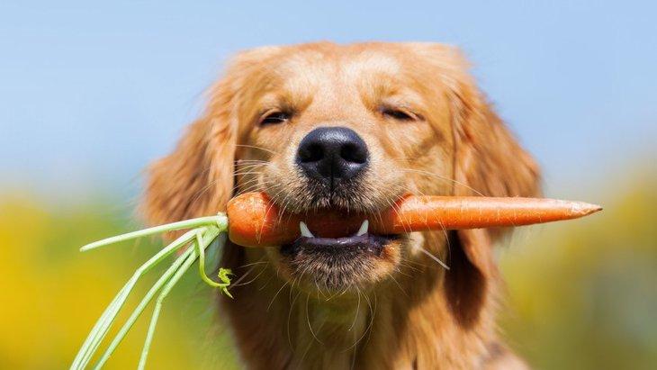 犬も食べられる冬の野菜5つ