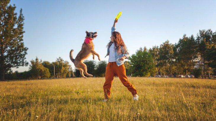 犬が遊びたがっている時によく見せる仕草4選