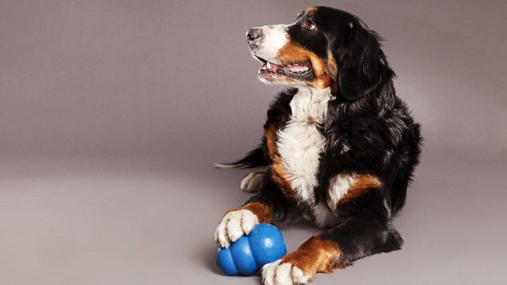 犬の噛み噛み行動全般に関するリサーチ結果