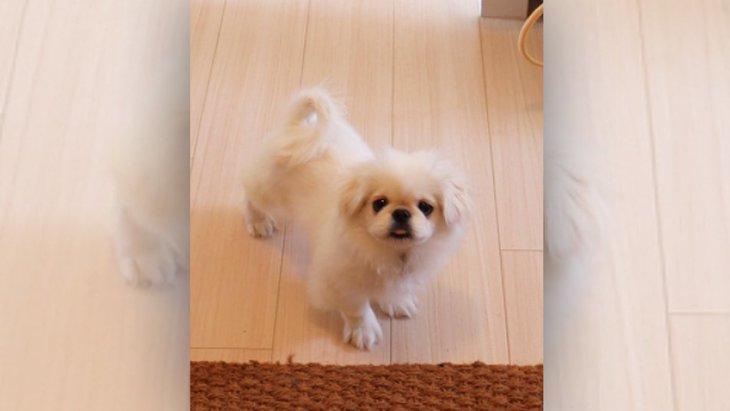 『どこいくの?』飼い主さんが辞職を決意した愛犬のお見送り姿が話題