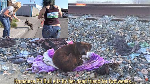 友達のなきがらに寄り添っていた犬を保護。寂しさを乗り越えて…